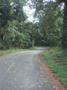 Folhas, mato, estrada